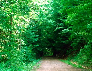 tunnel of tress