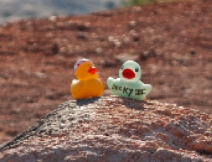 Ducky III & Quackers.JPG