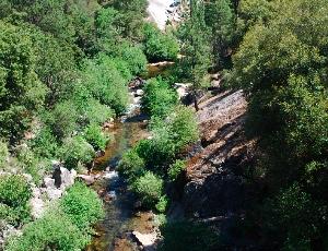 a creek.JPG