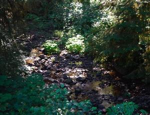 babbling brook.JPG