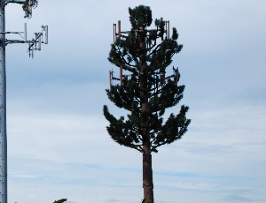 cell tower tree.JPG