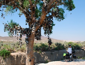 the Shoe Tree.JPG