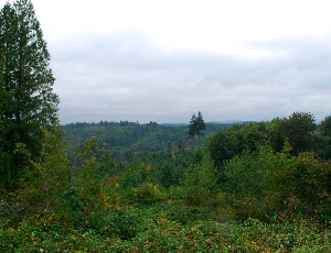wasington view.JPG